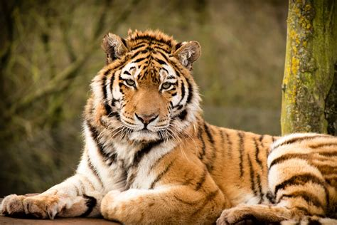 Beautiful Animals Wallpapers for Desktop WallpaperSafari