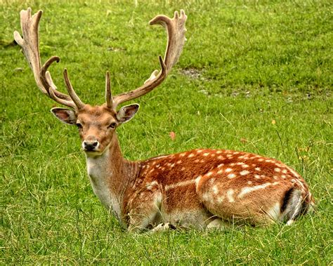 Animal Pictures · Pexels · Free Stock Photos