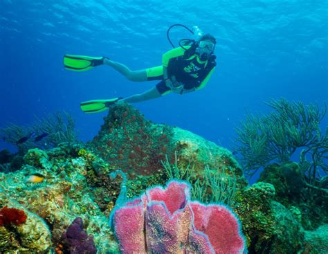 Cozumel Two Tank Scuba Diving Cozumel Cruise Excursions