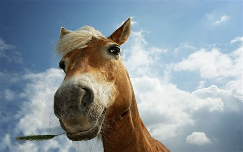 Horse WallpapersHD Horses Wallpapers Beautiful Cool