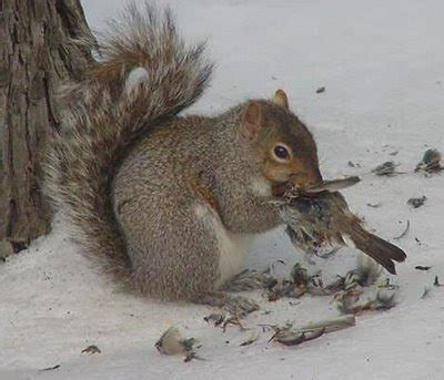 Felicia's Speakeasy: Squirrels Eat Birds