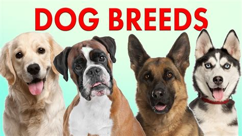Breeds of Dogs Part 1 Learn Different Types of Dogs