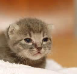 子猫:生後1週間の子猫ちゃんが里親 ...