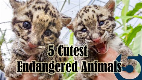 5 Cutest Endangered Animals: Facts in Five YouTube