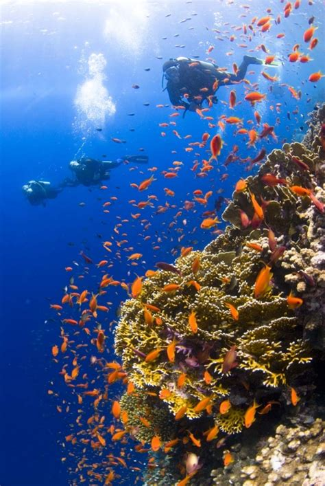 Safaga Port Egypt, Safaga information