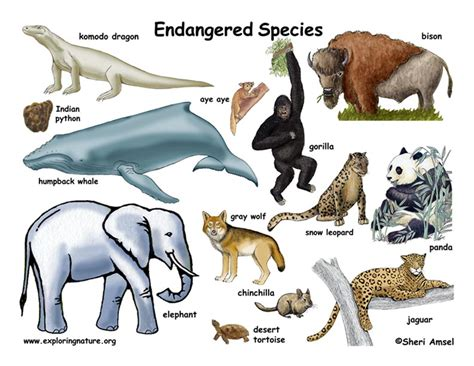 Endangered Species Endangered Vulnerable,Threatened Of Animals