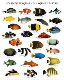 Basic Methods of Pet Care: The Latest Fish Breeds For Your Aquarium