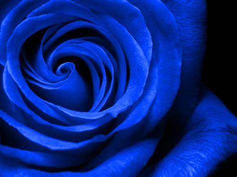 Royal Blue Wallpaper