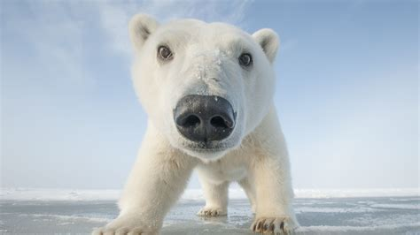 Snowbound: Animals of Winter About Nature PBS