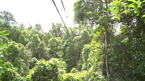 Zip Lining Tours and Adventures in the Fiji Rainforest