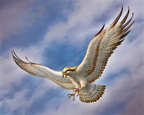 Hintergrundbilder Vögel Falken Tiere Gezeichnet