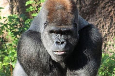 Endangered Rainforest Animals ( Endangered Species ) Pinterest