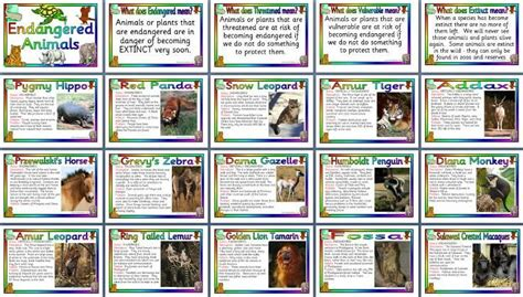 Endangered animals posters $2 pounds Teaching Topic