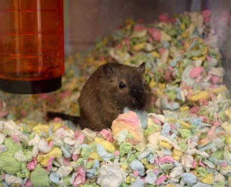 Carefresh Animal Bedding 10L Confetti Hamster & Gerbil