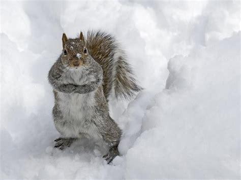 snow animals hd HD Desktop Wallpapers 4k HD