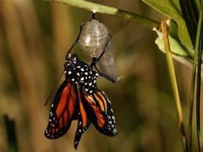 Monarch Butterfly Life Cycle and Migration National