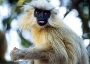Endangered Species in India Top 6 Endangered Species