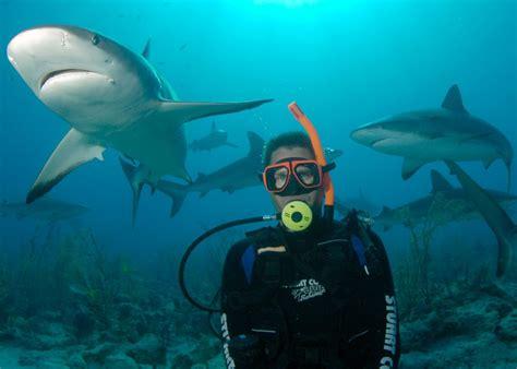 Nassau Shark Scuba Diving Adventure Bahamas Cruise