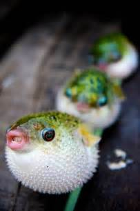 Best 25 Cute fish ideas on Pinterest Beautiful sea creatures, Water animals and Pretty fish
