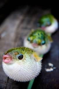 Best 25 Cute fish ideas on Pinterest Beautiful sea