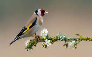flowers for flower lovers: Flowers and birds desktop wallpapers