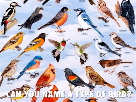 The gallery for > Different Kinds Of Birds And Their Names