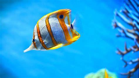 Moving Aquarium Wallpaper (49 images)