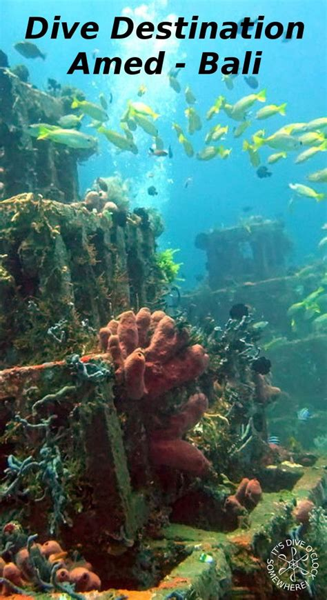 Best 25 Scuba diving bali ideas on Pinterest Goal