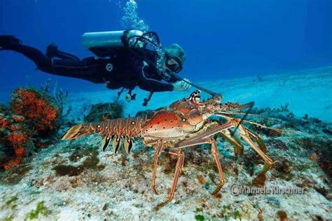 Best Scuba Diving Spots in Cozumel, Mexico