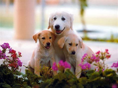 WallpaperfreekS: HD Cute Dogs Wallpapers 1600X1200