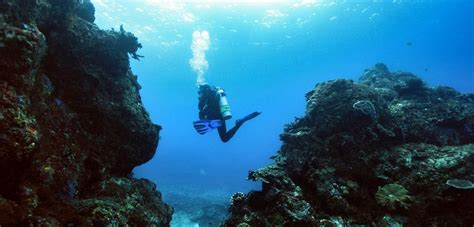 Bali Underwater Dive Sites in Padangbai Bali OK Divers