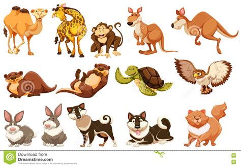 Set Of Different Types Of Animals Stock Vector