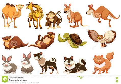 Types Of Animals wwwpixsharkcom Images Galleries