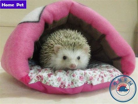 24 best Hedgehog Ideas and Tips images on Pinterest Pigs
