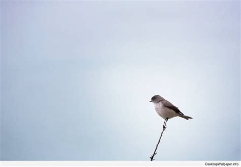 minimalist bird wallpaper Desktop Wallpapers