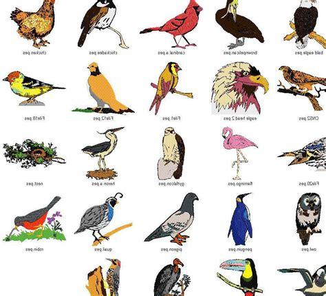 Best 28 Types Of In Birds different types of birds