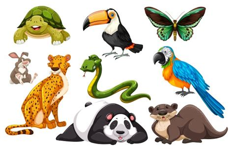 Different kinds of wild animals illustration Vector Free