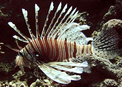 Top 10 Invasive Species That Are Only Invasive Because of