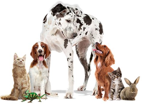 Welcome to the National Pet Show 2018 National Pet Show