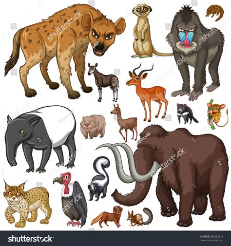 Different Kind Wild Animals Illustration Stock Vector