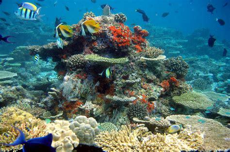 Best Places for Scuba Diving https://www