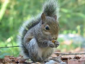 Squirrel Fun Animals Wiki, Videos, Pictures, Stories