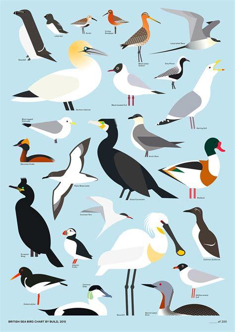 British Sea Bird Chart by Build graphic … Pinteres…