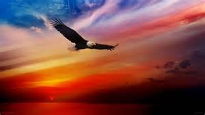 Flying Bald Eagle Wallpaper HD 1080P Free For Desktop