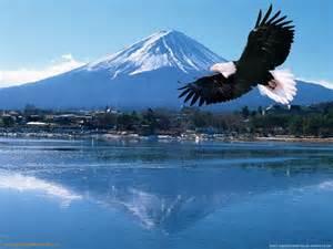 eagle pic eagle pic eagle pic eagle pic eagle pic eagle pic eagle pic