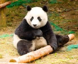 World Animal: Endangered Animal