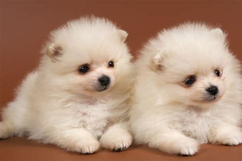 Cute Animal Wallpapers, Hd Wild Life Photos, Pet Images