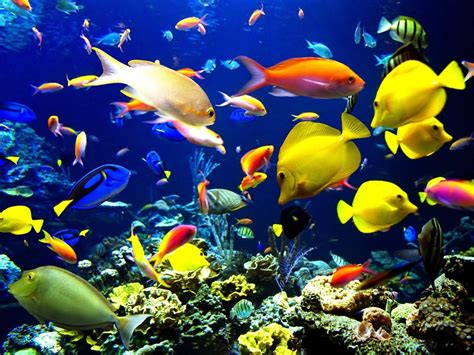 Fish Wallpapers, Pictures, Pics, Images, Photos
