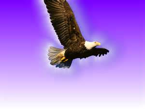 flying eagle desktop wallpaper High Quality Wallpapers,Wallpaper