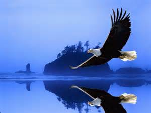 eagle bird wallpaper latest eagle bird wallpaper eagle bird flying